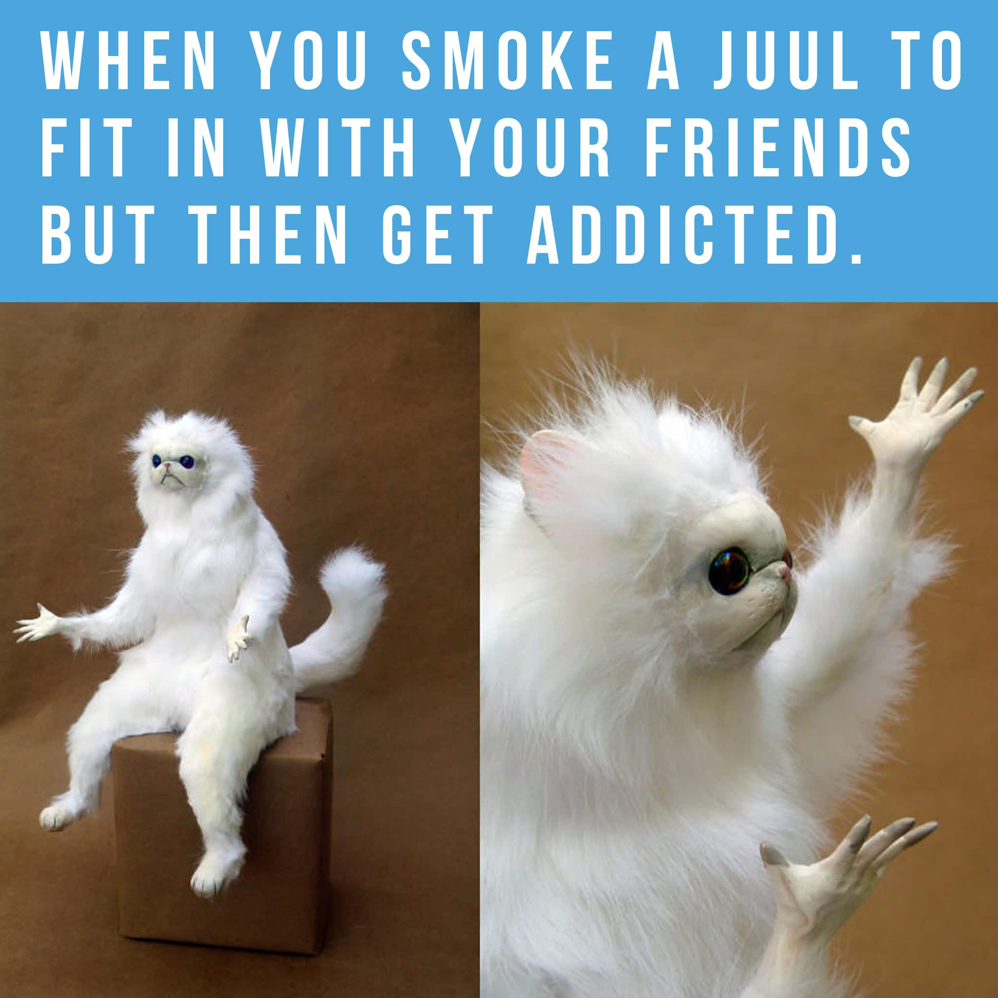 Meme format. Persian cat room guardian meme, persian cat with look of frustration and confusion. When you smoke a juul to fit in with your friends but then you get addicted.